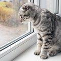 猫は雨の日眠くなる?お天気と猫の体調について