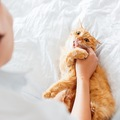猫が噛む理由とやめさせる方法