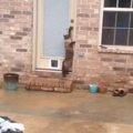 玄関にキャットドアを取り付けた!猫の反応は?