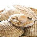 猫は貝を食べると耳が落ちる?危険な種類、安全な種類を紹介