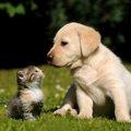 猫も狂犬病になる!知られざる理由と予防法