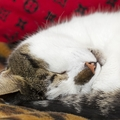 猫のウイルス性鼻気管炎(猫ヘルペス)症状と予防策