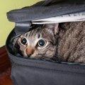 猫用ポータブルケージの使い方や選び方、おすすめ商品まで