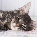 猫が嘔吐する理由とその処理方法について