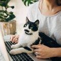猫の『座る位置』でわかる心理4つ!飼い主への信頼度が丸わかり!