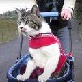 お散歩猫ちゃん、帰りになるとお喋りさんに!