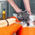 猫に人のシャンプーは使ってもいいの?飼い主の方の疑問を解決