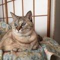 猫と出会う9つのシチュエーション