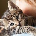 猫の分離不安症の症状とその対策について