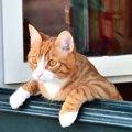 飼い猫は部屋の中だけで育てても問題ないのか