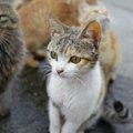 猫の集会って何が行われているの?