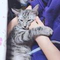 愛猫の仕草でわかる「飼い主の愛され度」をチェックしよう!