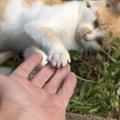 雑種の猫の特徴と純血種との違い