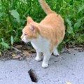 猫よけ対策で重曹を使う方法と注意点