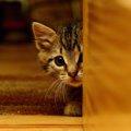 猫に信頼されない人の8つの特徴