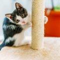 猫の爪とぎのしつけグッズを年齢別に紹介!トレーニングのポイントも…