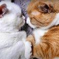 ぎゅーっとおでこをくっつけて寝る姿が可愛すぎる猫さんたち♡