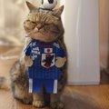 ニャールドカップのスタメンにゃ!!エキゾチックショートヘアの寅次郎…