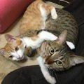 保護猫のトライアル期間チェックしたい4つのこと
