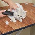 猫をバリカンでお手入れする方法とおすすめ商品3選