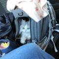 愛猫と外出するときに注意するべきこと3つ
