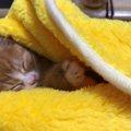 暴風雨の中小さな体で『生きたい』と鳴き続けた子猫『虎太郎(こたろう…