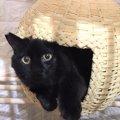 クラフトバンドの猫ちぐらで猫もあなたも大満足!
