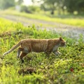 動物看護師が教える!野良猫を保護した時にすべき4つのポイント