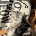 高齢猫に『長生き』してもらう秘訣5選