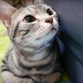 おめめギュン!「遊ぶ?」に反応する猫ちゃん