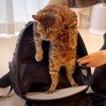 「動物病院に行きたくニャイ!」抗議する姿も可愛い猫ちゃん♡