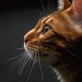猫の横顔がかわいい画像8選!