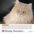 英語で書かれたおすすめの猫カレンダー