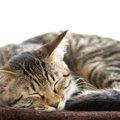 猫の嘔吐の危険性とは?正しい判断をするための観察力を持とう