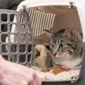 猫の不治の病『すい炎』ってどんな病気?注意すべき世代や原因・症状5つを…