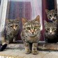 猫社会で『上下関係』はどう決まるの?犬との違いや人間との主従関係…