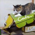 猫カフェ閉店の瞬間を撮られた猫ちゃん!?