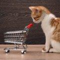 猫のプレミアムフードの特徴とおすすめ商品3選