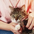 猫の爪を切らないリスク4つ!嫌がる時の対処法