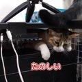同居猫ちゃんもビックリ!お気に入りの挟まりスポットを見つけた猫ち…