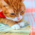 猫を飼っている人が買うべきではない『5つのもの』