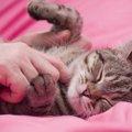 猫のしゃっくりは病気のサイン?原因と止まらない時の対処法