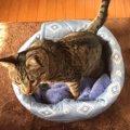 とっても簡単!手作りの温かい猫ベッド!