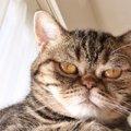 猫の機嫌が悪くなったときの対処法3つ