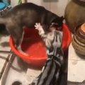 お水で遊ぶワンちゃんに怒り爆発な猫ちゃん