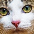 猫が涙を流す8つの病気と対処法