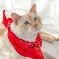 猫にバンダナがかわいい!手作りする方法やおすすめ商品5選!