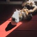 太陽大好きっコ集まれ~♪陽だまりの位置に合わせて移動する猫達