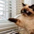 まるで窓際警備員?!猫が外を眺めている時の気持ち!