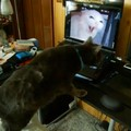 「あにょこはどこ行ったにゃ!?」パソコンに映る猫を見て探しにいく…